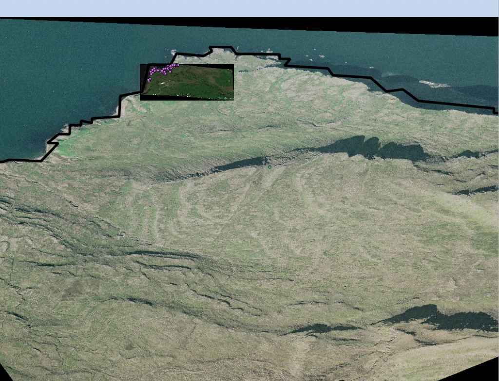 WGS 84 (EPSG:4326) projection of Skalanes with a close up (higher definition) Google Earth image and some of the Eider points on top. The Skalanes government coast layer is also on top.