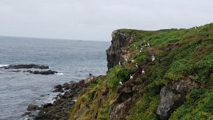 35-11-puffin-colony-grimsey